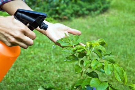 diy-organic-pesticide-sprays