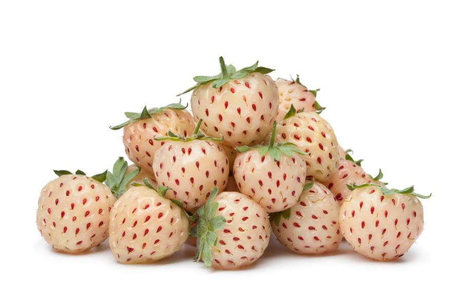 Weird Hybrid Fruits 7